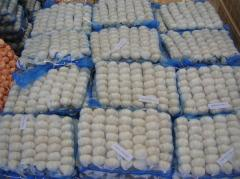 Fresh garlic with 10KG/Mesh bag