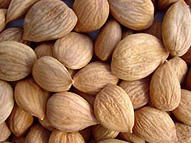 Seeds, Nuts