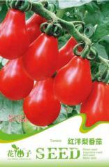 红洋梨番茄