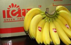 唯新letta香蕉
