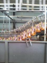 Duck Slaughter Equipment and Abattoir Line