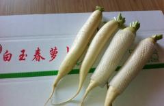 各种规格白萝卜