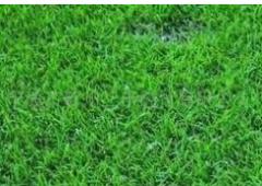 雨田花园YT-MM-002草皮绿化专业承接草坪绿化设计