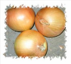 Yellow skin onion