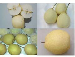 Pear (Ya Pear,Su Pear,Early su Pear,Golden