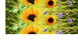 Sunflowers Design Polyester Fabric