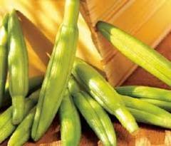 陕西优质黄花菜