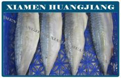 Pacific Mackerel Fillet