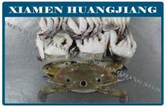 Whole Frozen Crab