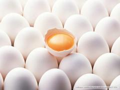 F018-19 Egg yolk flavour