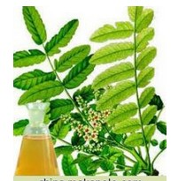 Pure Olibanum oil,Frankincense Oil,Frankincense essential Oil,CAS 8016-36-2