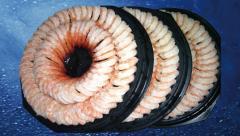 Shrimp Bunch