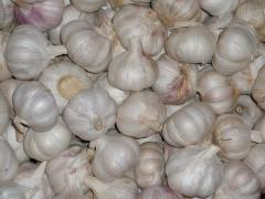 New Harvest Chinese Garlic
