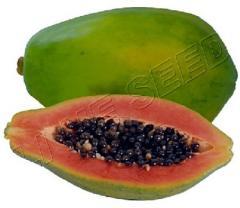 Papaya 709