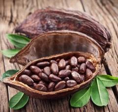 Theobroma Cacao Extact