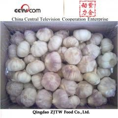 2014 new crop fresh garlic