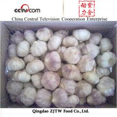 2014 new crop fresh garlic