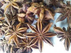 Chufa or earthen almonds