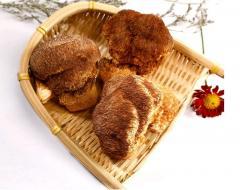 Lion's Mane Mushroom/ Hericium Erinaceus