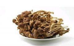 (Tea tree mushroom) Extract 30% Polysaccharide