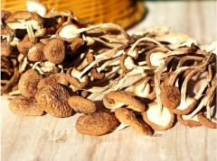 Dried Tea Tree Mushrooms green Food