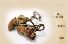 Jin chan hua dry cicada fungus cicada horn