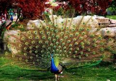 Vogels andere decoratieve