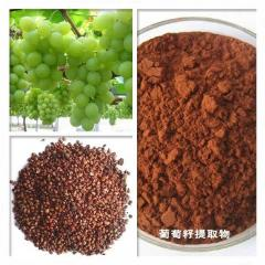 200g Top Quality Grape Seed Extract Powder 95%