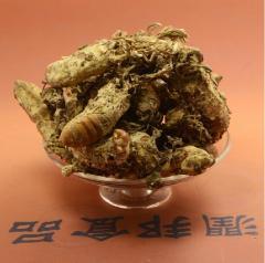500g jin chan hua dry cicada fungus Ophiocordyceps
