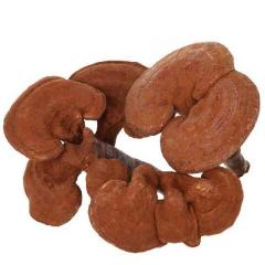 500g Chinese Changbai Mountain Ganoderma