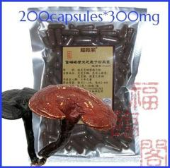 200capsules*300mg/bag ganoderma spore powder