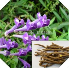 250g Chinese Herbs Scutellaria baicalensis Seeds