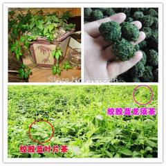 10g Chinese Rare Gynostemma Seeds Herb Medicine