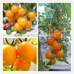 Pearl yellow tomatoes, tomato seeds, cherry