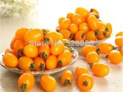 Yellow Saint fruit Tomato Seeds, tomato seeds