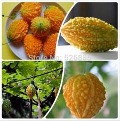 Free shipping  Balsampear seeds, Small Lai