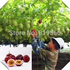 Limited  fruit seeds 120pcs passion outdoor plants