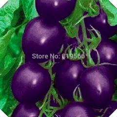 60 pcs Purple Cherry Tomatoe fruit and vegetables