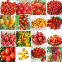 Tomato mix seeds, tomato family, health  fruits