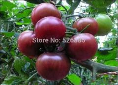 Free shipping Tomato Seeds, Colorful purple