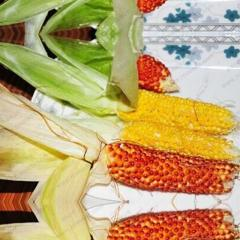 Sweet Mini Corn Seed Colorful Vegetable Seed Corn