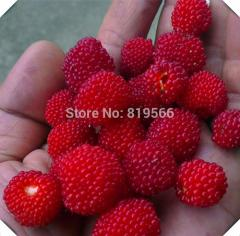 150 pcs New Red Duchesnea indica fruit  Seeds home
