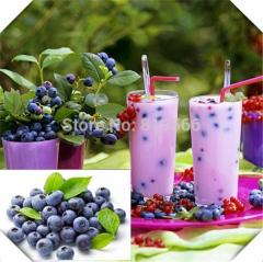 100 pcs blueberry vaccinium fruit seeds