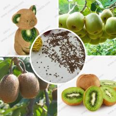 Fresh kiwi seeds 100% real actinidia chinensis