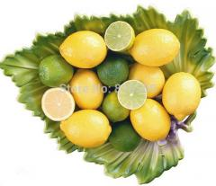 Sale citrus limon fruit seeds 100pcs lemon home