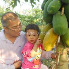 New arrival papayas fruit seeds 50pcs papain home