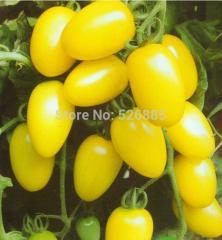 Free shipping Milk yellow tomato seeds, tomato