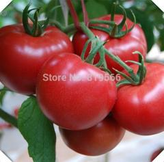 60pcs sale Chinese tomatoes vegetables seeds