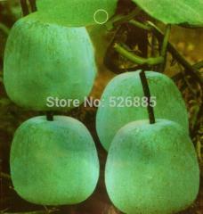 A bunch of small bells melon,china waxgourd ,wax