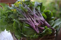 Free shipping Red Cabbage seeds, Red chinese kale,